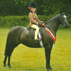 Show Hunter Pony